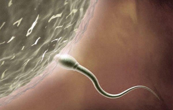 Врачи призывают мужчин не откладывать отцовство из-за мутаций спермы