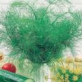 Укроп - полезная для здоровья зелень |